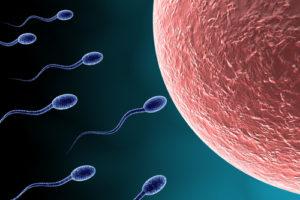 精子の質を鍼灸で改善